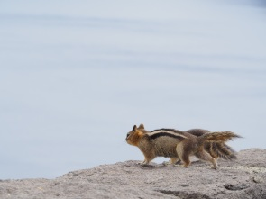 Chipmunks looking for snacks near Crater Lake