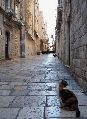 Croatian cat ponders the calm before the crowds in Old Town Dubrovnik