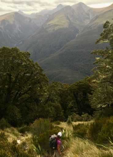 Cresting the tree line on the way to Brewster Hut in New Zealand